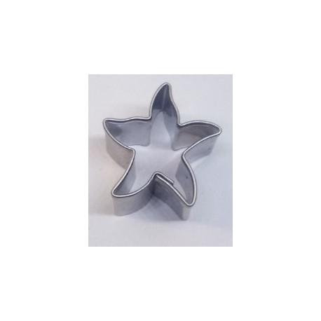 Mořská hvězdice mini